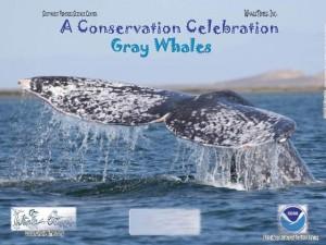 Gray whale poster weblg