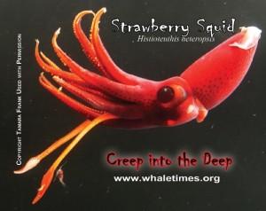 Strawberry Squid Copyright T Frank WhaleTimes wblrg