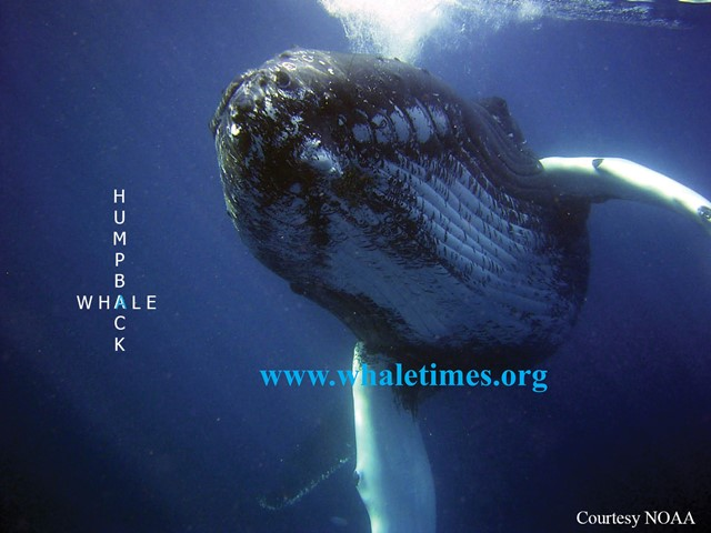 krill   WhaleTimes, Inc